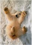 ellen degeneres polar bear 50 shades