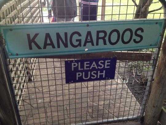 kangaroo pet australia