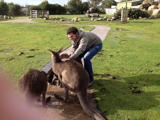 kangaroo hug australia
