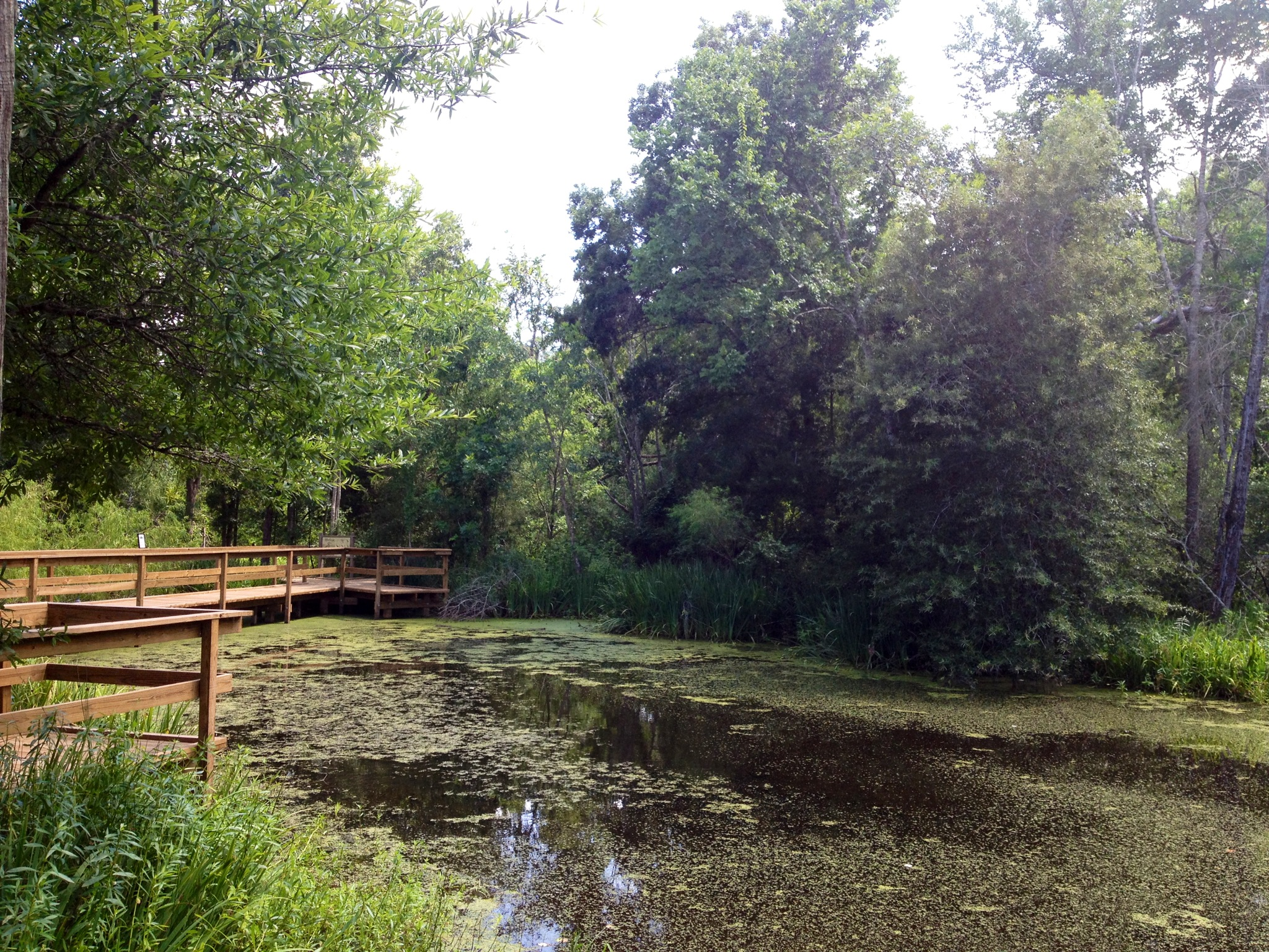 Armand Bayou Nature Center | DumbFunnery