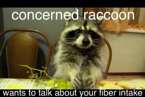 Concerned Raccoon 1