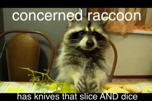 Concerned Raccoon 3