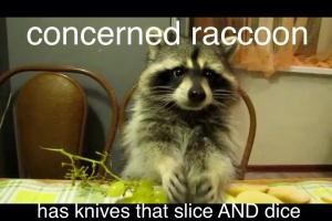 Concerned Raccoon 3