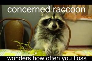 Concerned Raccoon 2