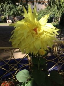 India flower