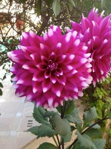 Big, pretty flower number 3.