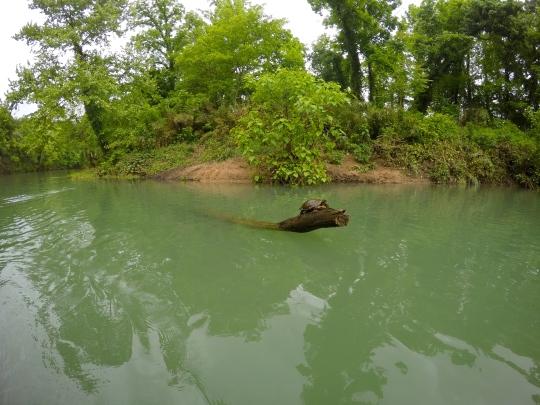 Hey there, turtle, I shall call you ... Doug.