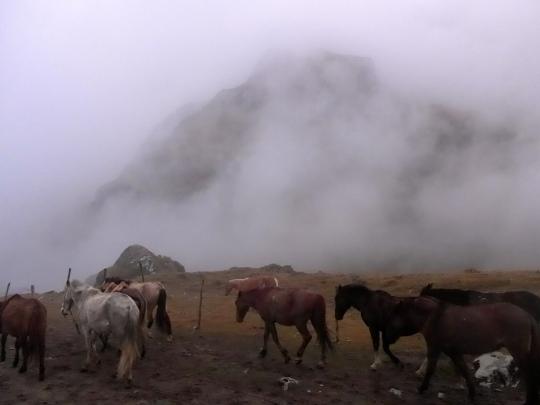 The still very foggy day 1.