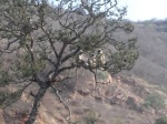 tree-monkeys
