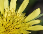 other yellow flower